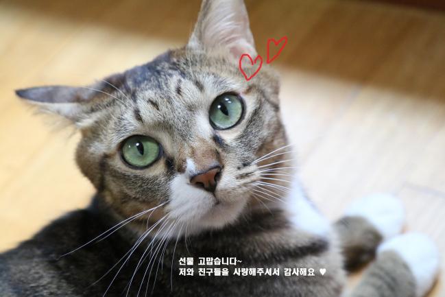 별이네 (27) - 복사본.JPG