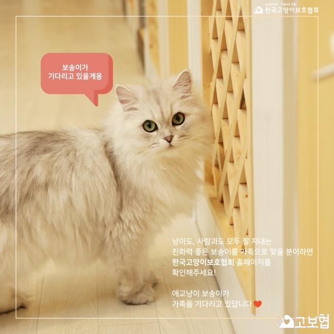 보송이-입양홍보 (8).jpg