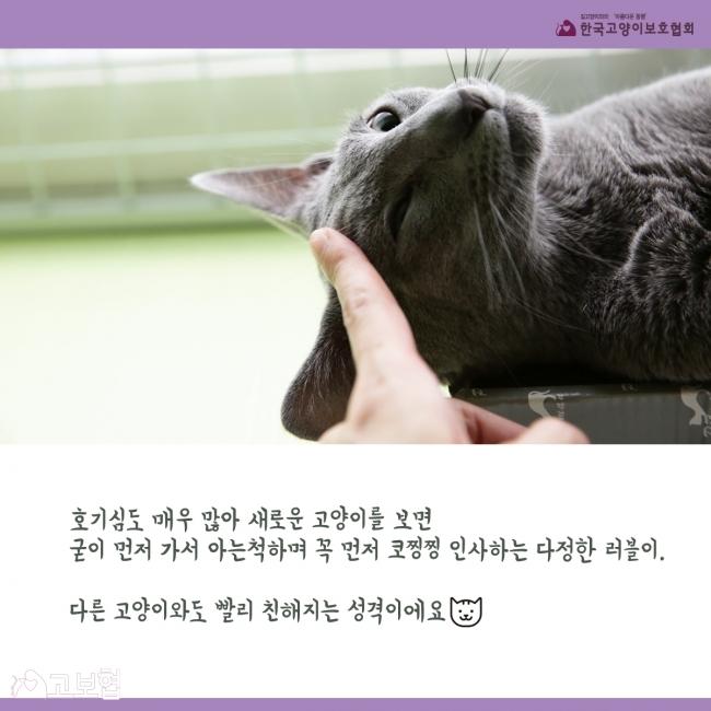 러블이_입양홍보_5.jpg