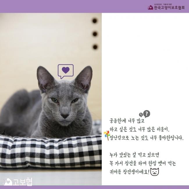 러블이_입양홍보_6.jpg