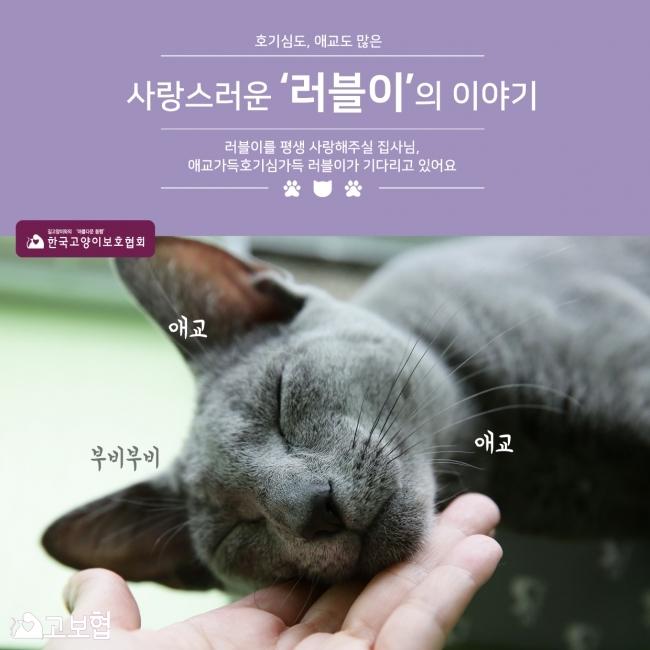 러블이_입양홍보_1.jpg