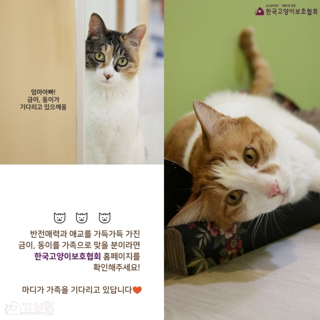 금이동이-입양홍보_8.jpg