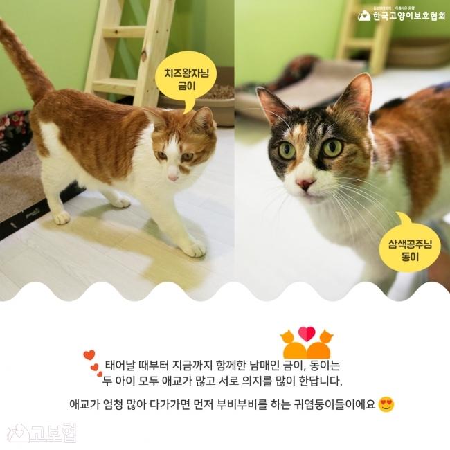 금이동이-입양홍보_3.jpg