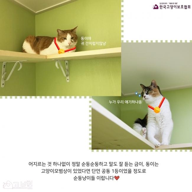 금이동이-입양홍보_7.jpg