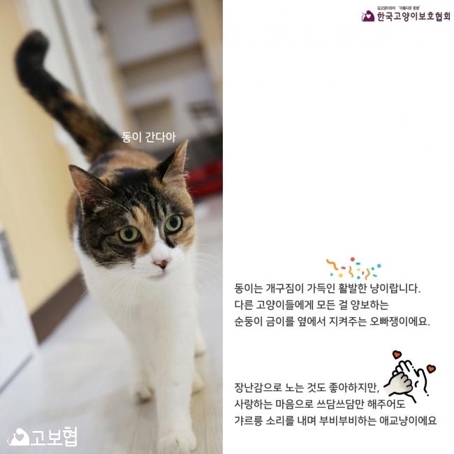 금이동이-입양홍보_5.jpg