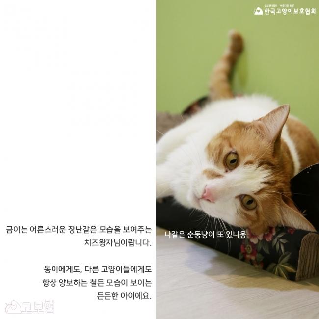 금이동이-입양홍보_4.jpg