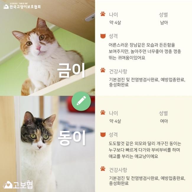 금이동이-입양홍보_2.jpg