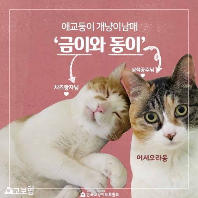 금이동이-입양홍보_1.jpg