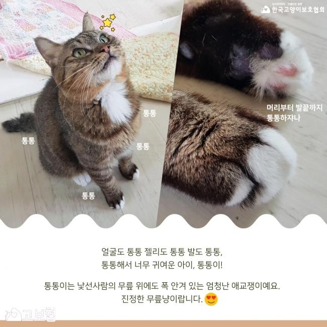통통이-입양홍보_3.jpg