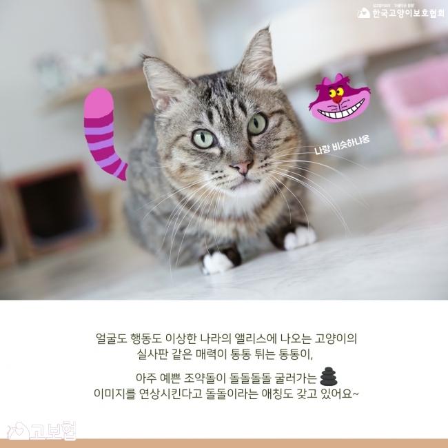 통통이-입양홍보_6.jpg