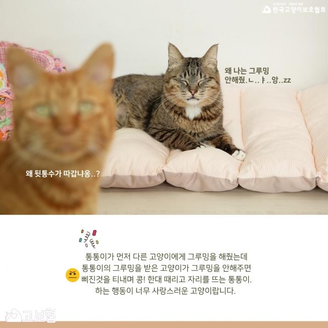 통통이-입양홍보_5.jpg