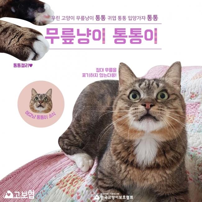 통통이-입양홍보_1.jpg