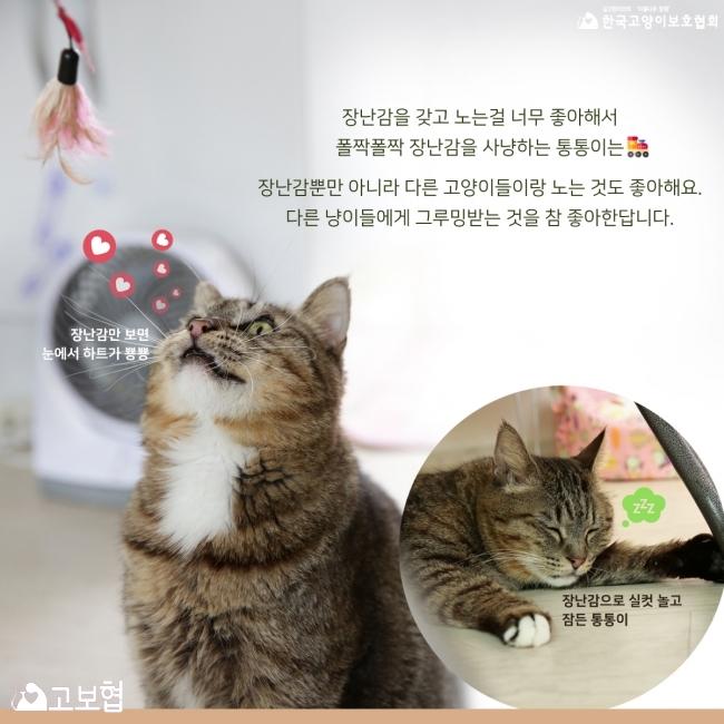 통통이-입양홍보_4.jpg