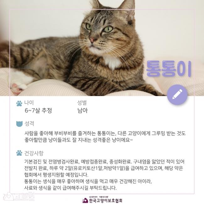 통통이-입양홍보_2.jpg