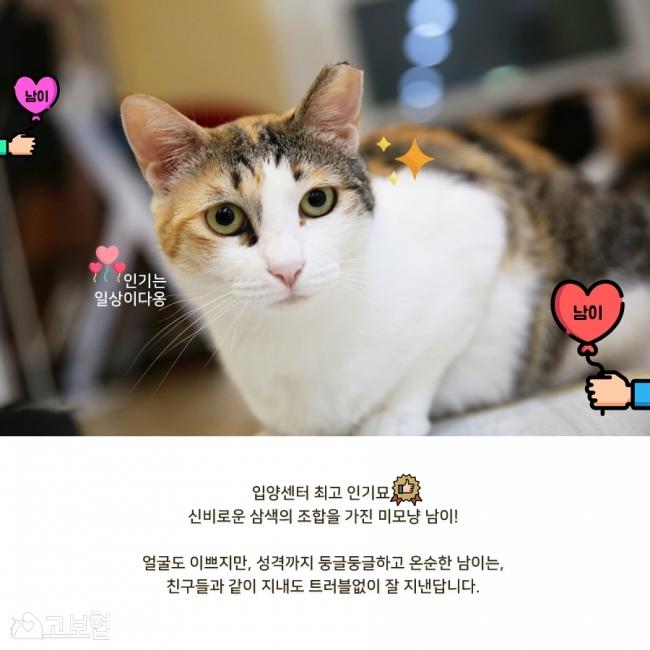 남이-입양홍보3.jpg