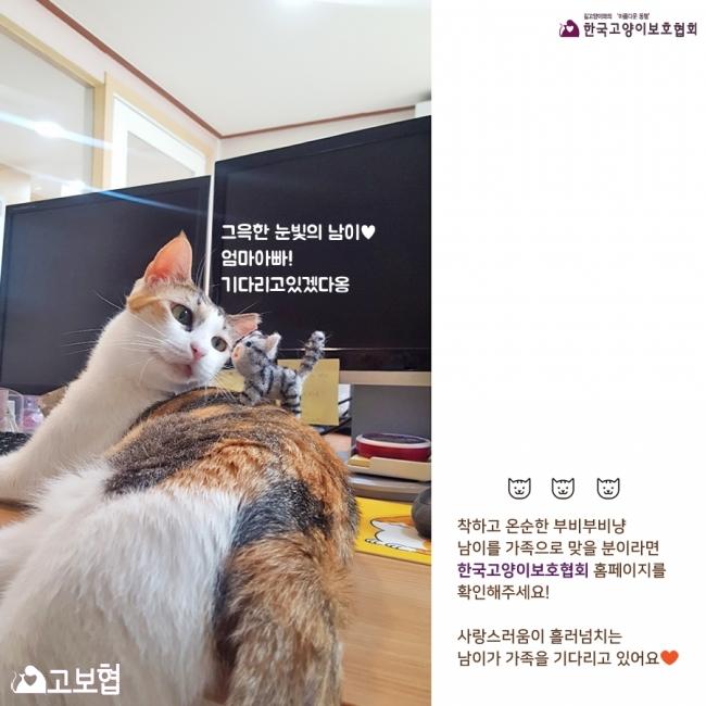 남이-입양홍보7.jpg