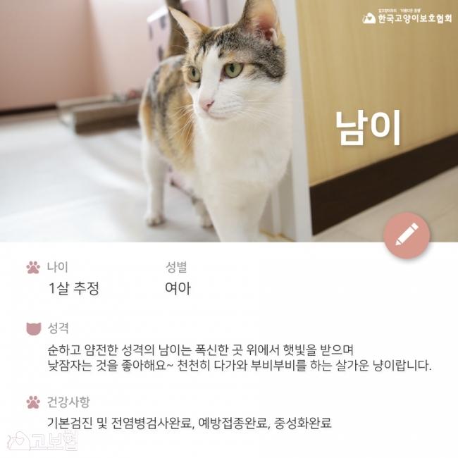 남이-입양홍보2.jpg