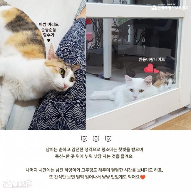남이-입양홍보4.jpg