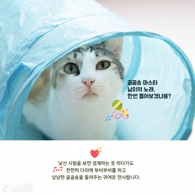 남이-입양홍보5.jpg