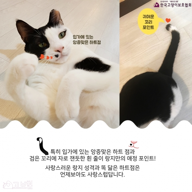 랑지_입양홍보4.jpg