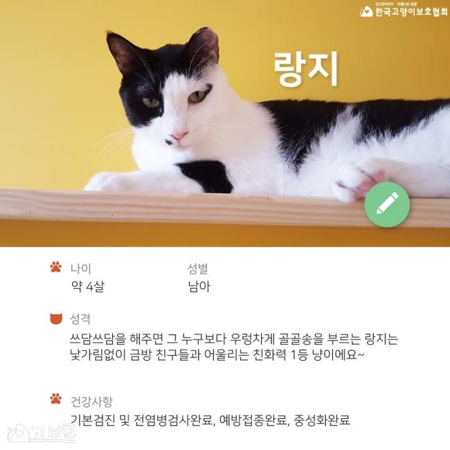 랑지_입양홍보2.jpg