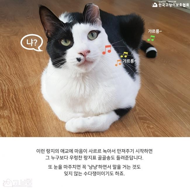 랑지_입양홍보7.jpg
