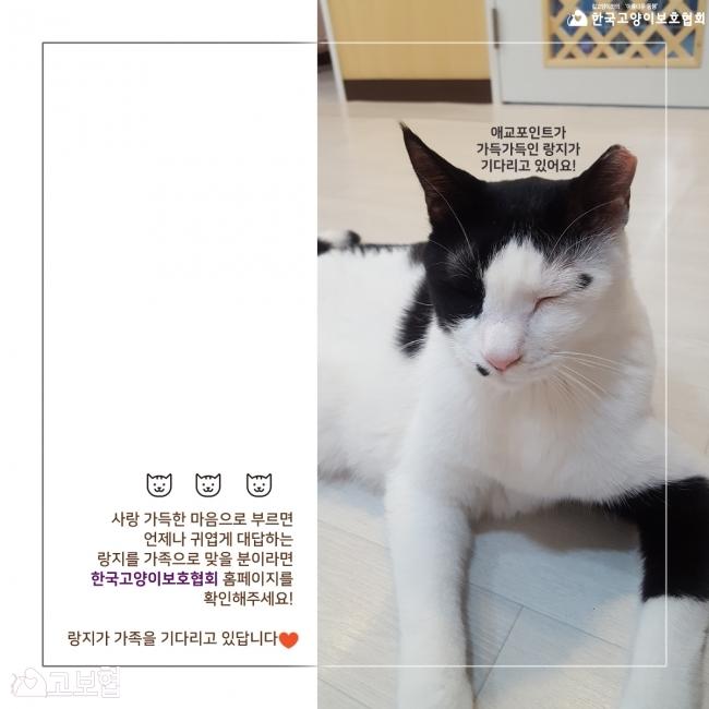 랑지_입양홍보8.jpg