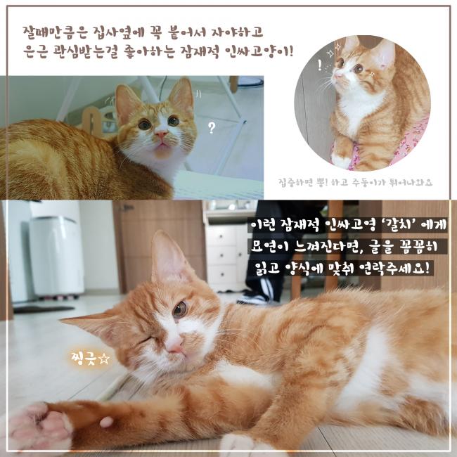 입양카드 5.png