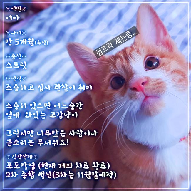 입양카드 2.png