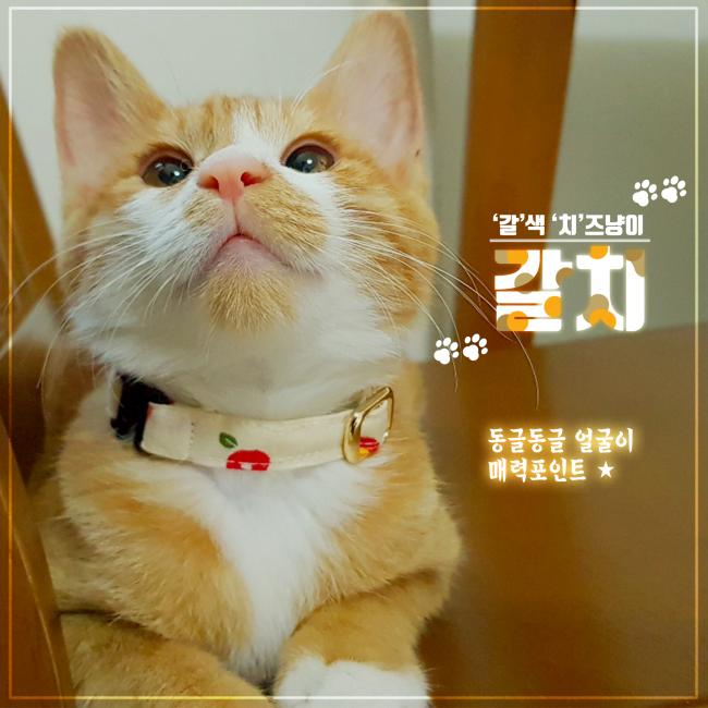 입양카드 1.png