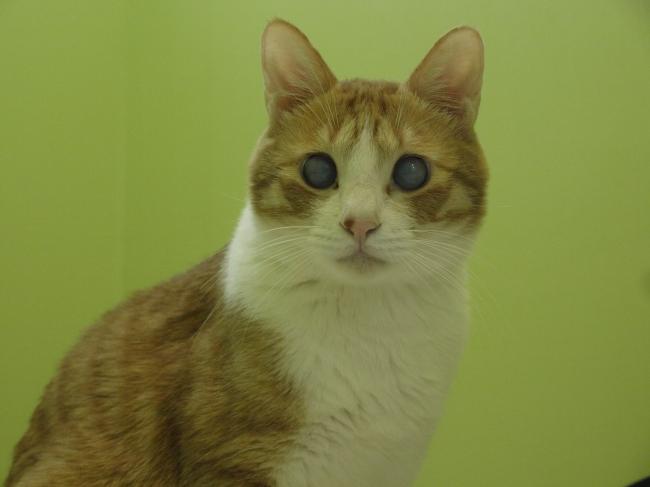 푸른 눈의 사랑둥이, 은하수 (28).jpg