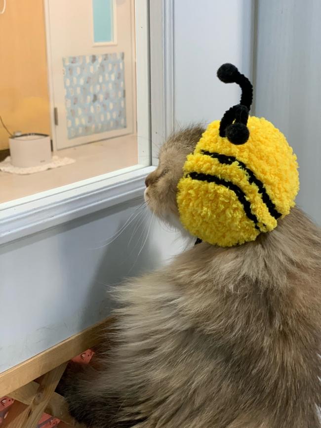 꿀벌이 (35).jpg