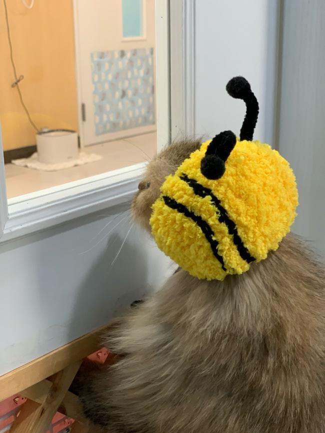 꿀벌이 (36).jpg