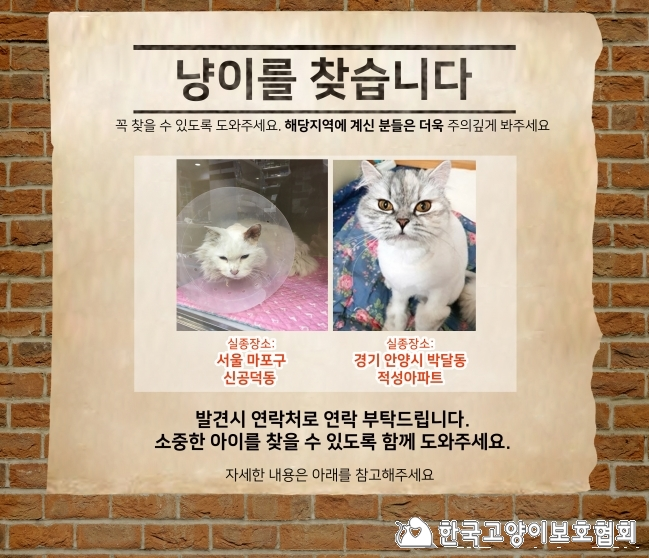 냥이찾기_메인(2월소식지)_수정.jpg