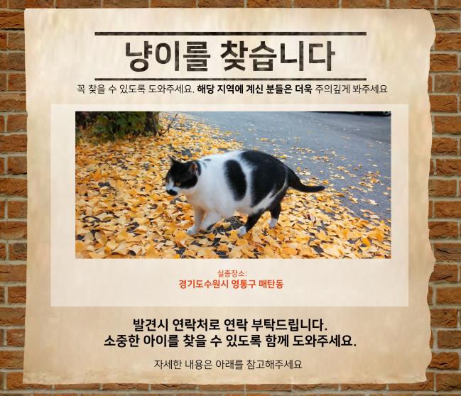 (10월) 냥이찾기_메인.jpg
