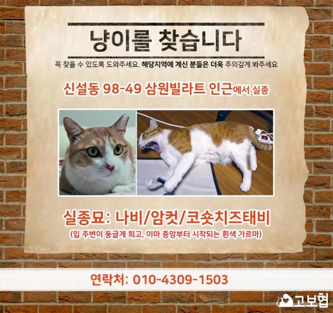 (4월)냥이찾기_세부(2_나비).jpg