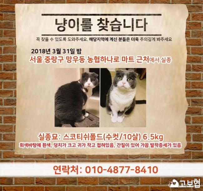 4월)냥이찾기_세부(망우동)2.jpg