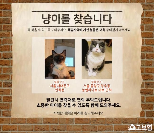 냥이찾기_메인(4월소식지)_2.jpg