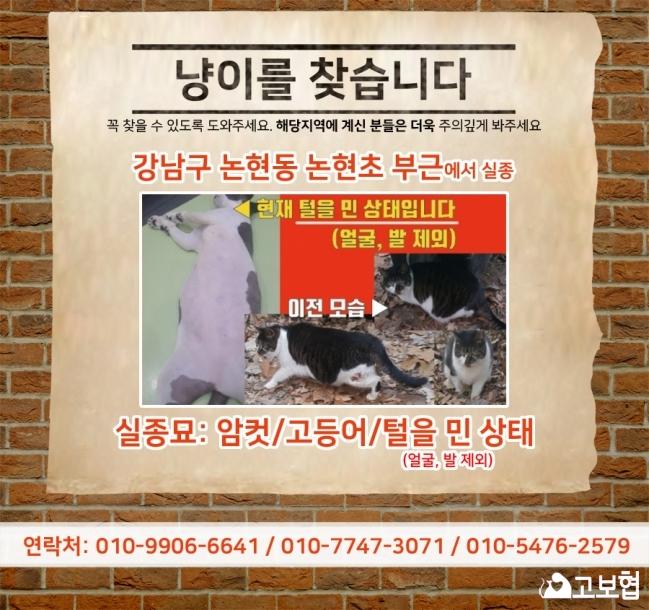 (4월)냥이찾기_세부(1_고등어).jpg