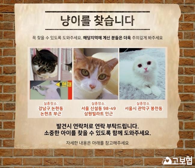 4월소식지)냥이찾기_메인.jpg
