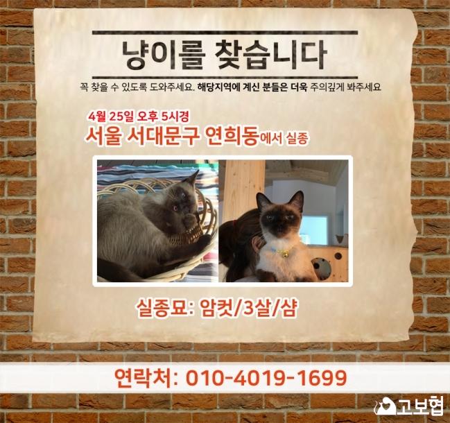 (4월)냥이찾기_세부(연희동).jpg