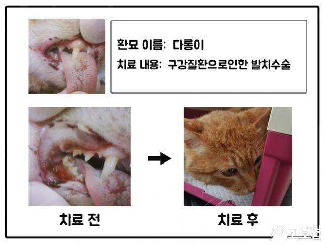 5월치료지원_다롱이.jpg