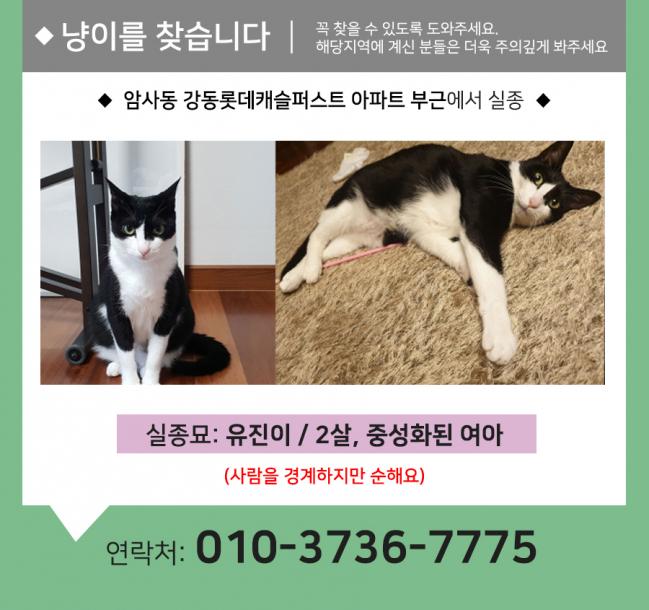 (7월)냥이찾기_세부3.jpg