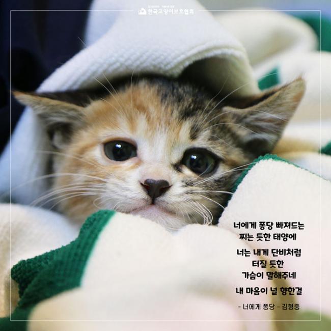 4_콧물이와퐁당이 (7).jpg