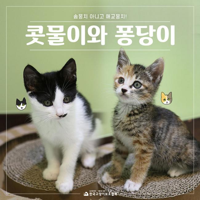 4_콧물이와퐁당이 (1).jpg
