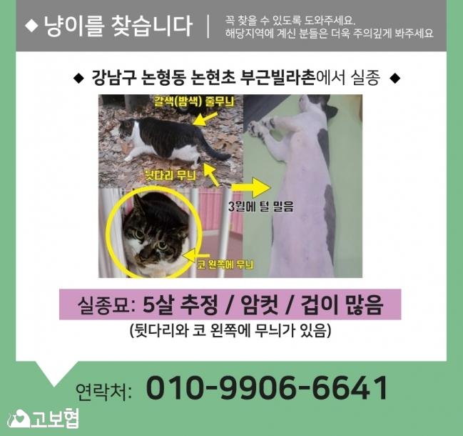 (7월)냥이찾기_세부.jpg