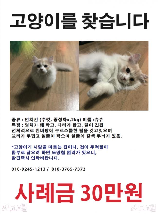(7월) 냥이찾기_세부정보1.png
