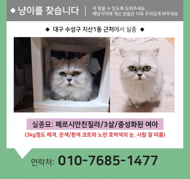 (9월)냥이찾기_세부4.jpg