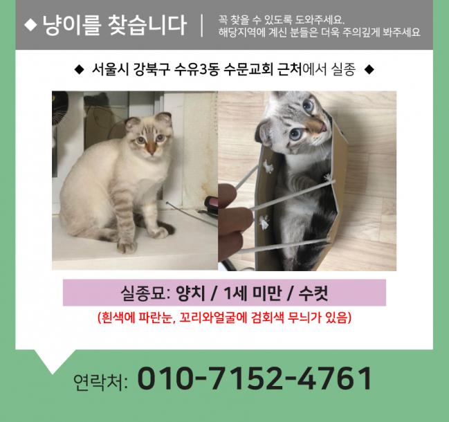 (9월)냥이찾기_세부2.jpg