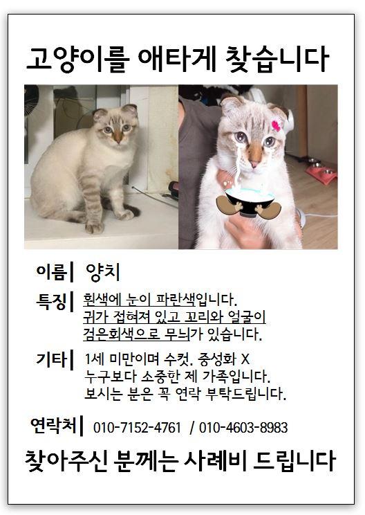 (9월)냥이찾기_세부2-4.jpg